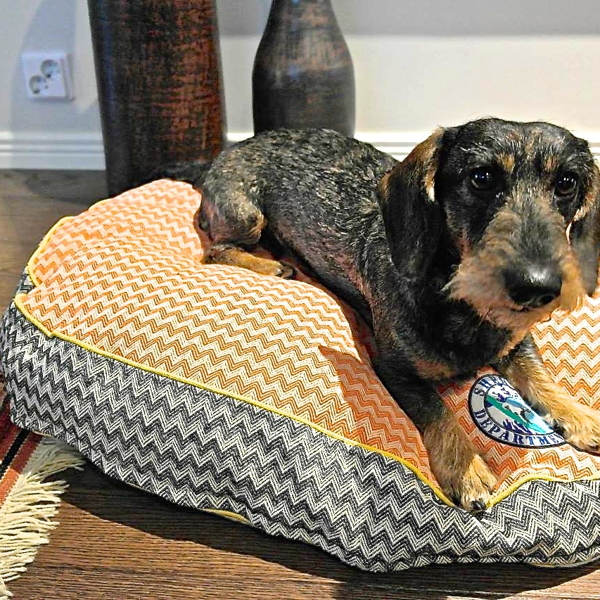 Rupert with his new ZigZag bed !
