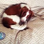 Dina enjoying her extra large bed!